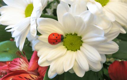 Ladybug Bouquet