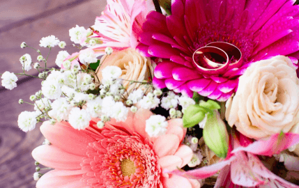 Gerber Daisies with Rings